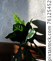 Green plant at home with sun shine and shadow 76125452
