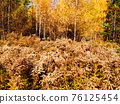 Autumn in the park with yellow leaves and faded plants 76125454