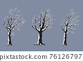 Set of Snow Covered Old Trees on the Wind 76126797