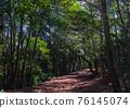 森林 樹林 道路 76145074