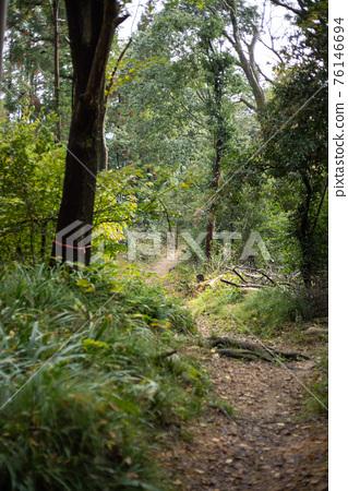 path, mountain trail, kyoto 76146694