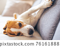 Beagle dog tired sleeps on a cozy sofa in livingroom 76161888