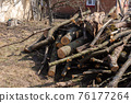 Preparing firewood for the winter 76177264