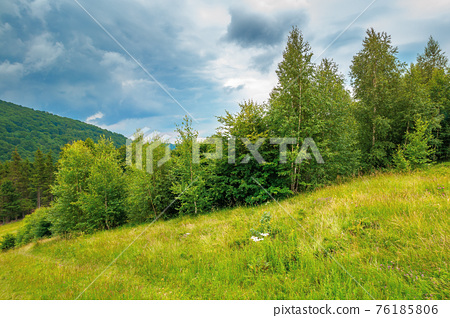trees on the hill in summer scenery. beautiful mountain landscape on a cloudy day 76185806