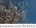 I took a walk in Fujimi Park on a sunny day 76194322