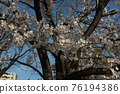 I took a walk in Fujimi Park on a sunny day 76194386