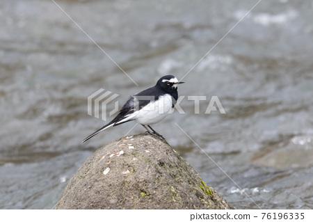 birdie, small bird, bird 76196335