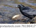 bird, birds, fowls 76196417