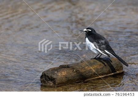 birdie, small bird, bird 76196453