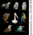 Set of many birds. Wildlife animal on black background 76198764