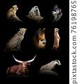Set of eight wildlife animal on black background 76198765