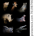 Set of seven wildlife animal on black background 76198766