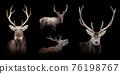 Set of many deer. Wildlife animal on black background 76198767