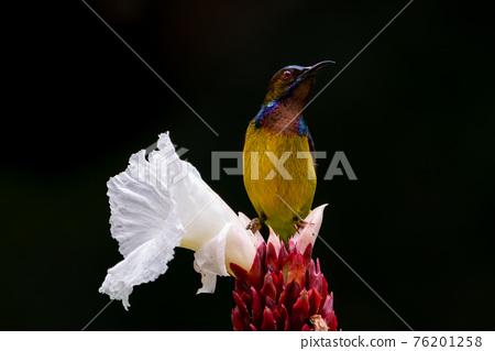 鳥兒 鳥 小鳥 76201258