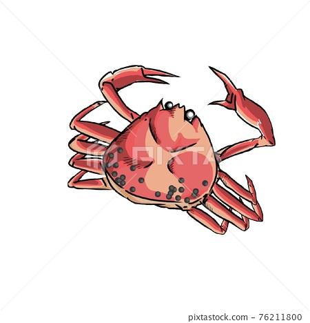 螃蟹 蟹 雪蟹 76211800