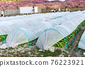 Field winter vegetables tunnel cultivation 76223921