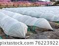 Field winter vegetables tunnel cultivation 76223922