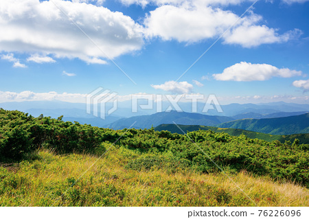 mountain landscape on a bright summer day. meadow in grass and plants on the hill. wonderful weather with fluffy clouds on the sky. chornohora ridge of carpathians 76226096