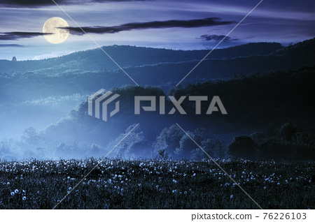 dandelion field in rural landscape at night. beautiful nature scenery with blooming weeds in full moon light. clouds on the sky above the distant mountain 76226103
