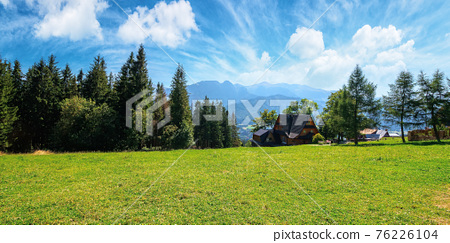 zakopane rural landscape in tatra mountains. spruce trees on the green grassy meadow of gubalowka range. beautiful nature scenery on a sunny day. clouds above the distant ridge 76226104
