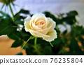 淺玫瑰粉色 76235804