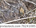 bird, birds, fowls 76241085