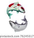 Yin Yang Carp white red fish (koi) realism isolate illustration. Fishing for big carp, feeder fishing, carp fishing. 76245017