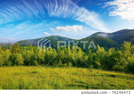 forest on the grassy meadow in the morning. beautiful countryside landscape in summertime. fog above the trees spreads from the distant mountains beneath a gorgeous sky with clouds 76246473