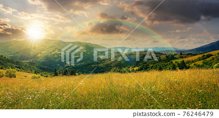 rural landscape with blooming grassy meadow at sunset. beautiful nature scenery of carpathian mountains in evening light. fluffy clouds on the blue sky 76246479