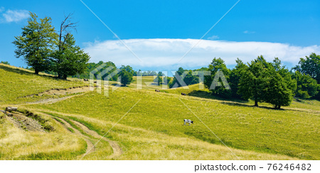 mountain landscape with pasture on a sunny day. beech trees on the hill. beautiful countryside rural scenery in summer 76246482