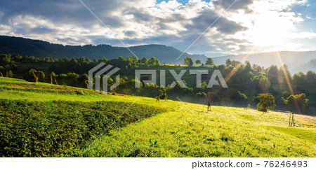 rural fields in the morning light. wonderful mountainous countryside scenery with grassy hills in summer 76246493