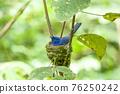 Black pillow blue dragonfly 76250242