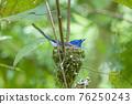 Black pillow blue dragonfly 76250243
