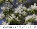 pistillate flower, bloom, blossom 76251130