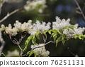 pistillate flower, bloom, blossom 76251131