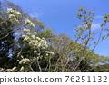 pistillate flower, bloom, blossom 76251132