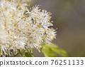 pistillate flower, bloom, blossom 76251133