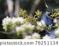 pistillate flower, bloom, blossom 76251134