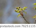 pistillate flower, bloom, blossom 76251135