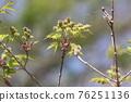 pistillate flower, bloom, blossom 76251136