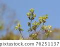pistillate flower, bloom, blossom 76251137