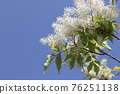 pistillate flower, bloom, blossom 76251138