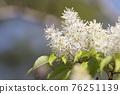 pistillate flower, bloom, blossom 76251139