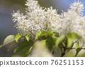 pistillate flower, bloom, blossom 76251153