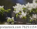pistillate flower, bloom, blossom 76251154