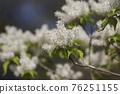 pistillate flower, bloom, blossom 76251155
