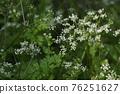 植物 植物學 植物的 76251627