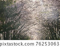 벚꽃,경의선숲길,마포구,서울 76253063