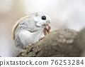 動物 小動物 囓齒類的 76253284