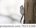 動物 分支 樹枝 76253286